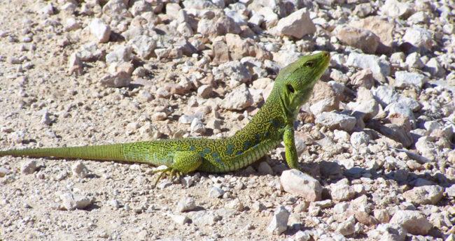 biodiversidad_004