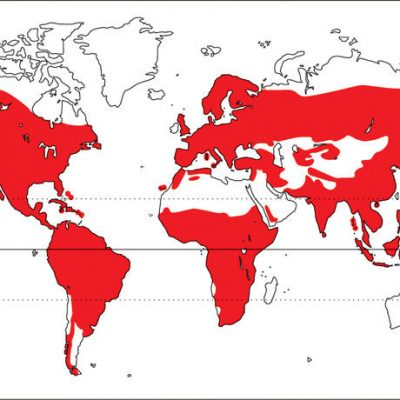 Distribución familia Picidae
