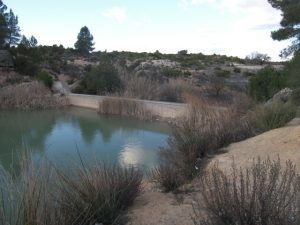 Dique embalsando agua (primeras fases de su vida útil). Fotografía realizada en el término municipal de Villamalea