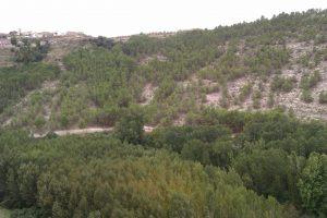Masa forestal de repoblación en Alcalá del Júcar, cumpliendo con su función protectora de la ladera frente a la erosión.