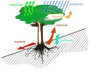 Lluvia Ideas Medioambientales