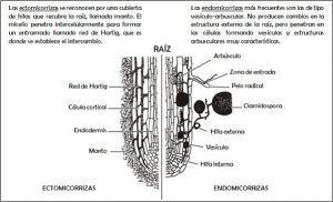 Raíz hongos_Ideas medioambientales