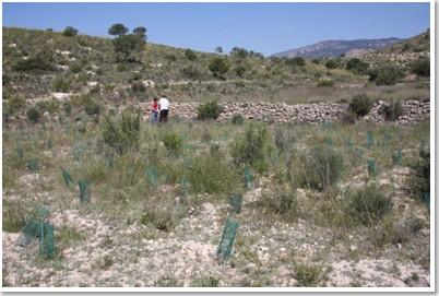 Reforestación ideas medioambientales