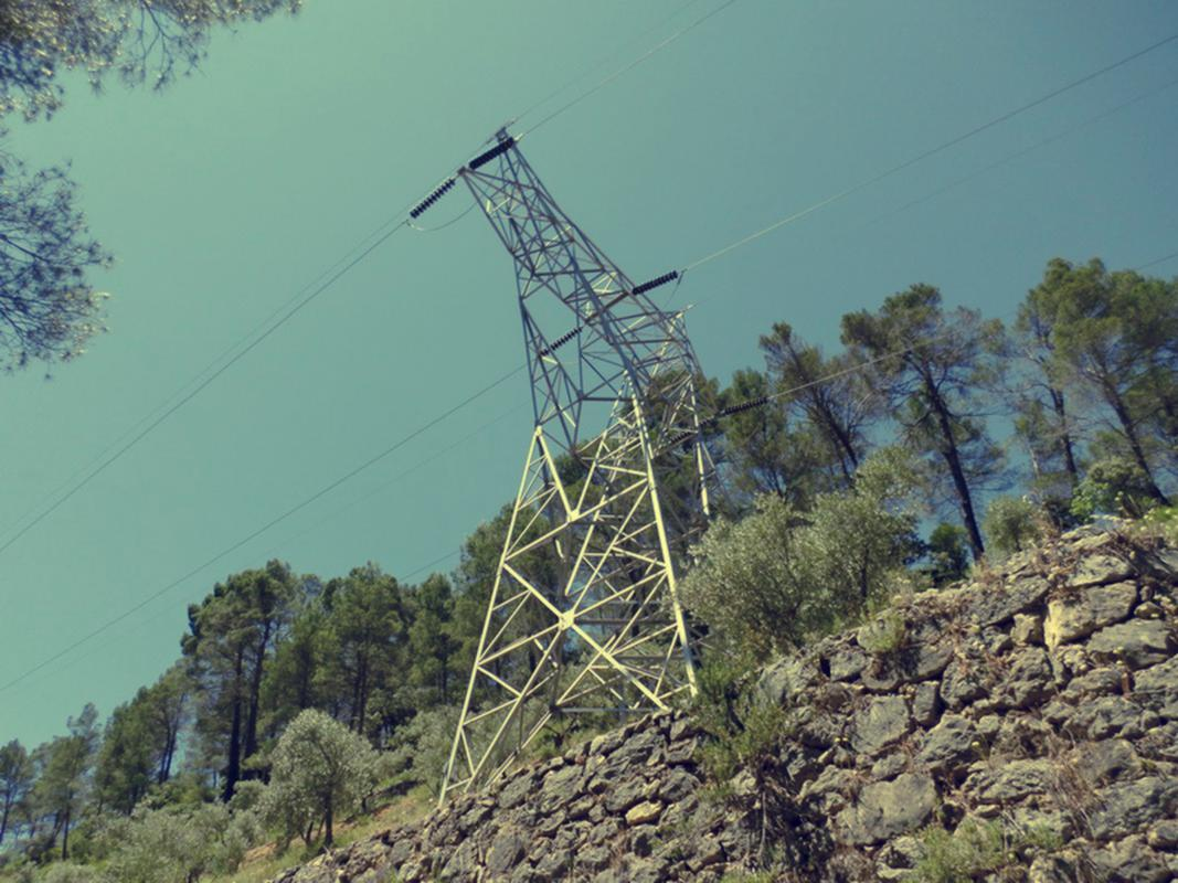 Sam_0194-forest