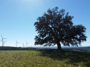 Parque eólico sometido a estudio de viabilidad ambiental