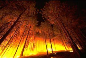 plan de autoprotección de incendios forestales