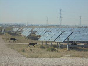 Planta solar fotovoltaica ovejas