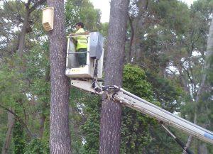 Colocación cajas nido murcielagos albacete