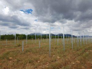 Vigilancia Ambiental de la Central solar fotovoltaica