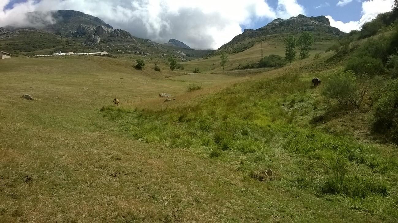 Pastos de montaña